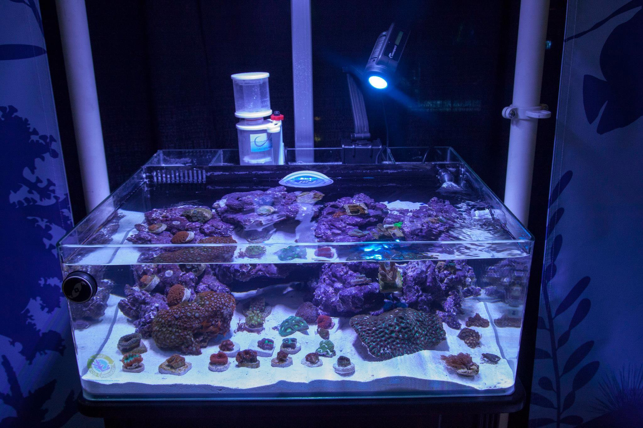 Pre Order Jbj 20 Gallon Rimless Frag Tank Aquarium Marine Depot Aquarium Tanked Aquariums Amazing Aquariums