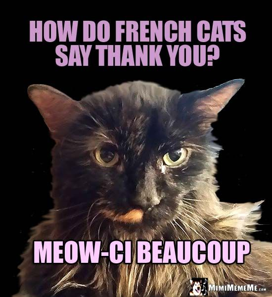 Pretty Kitty Asks How Do French Cats Say Thank You Meow Ci Beaucoup Funny Cat Jokes Funny Cat Memes Cat Jokes