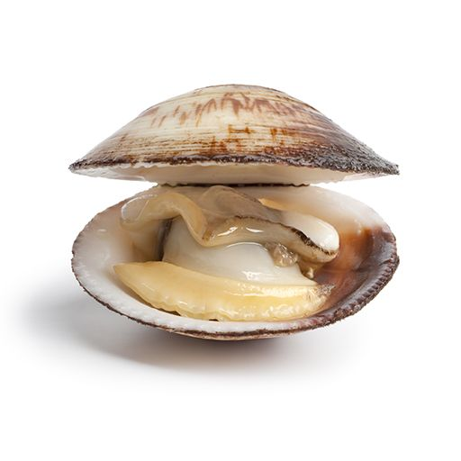 Difference Between Clams And Mussels Clams Food Borne Illness Food