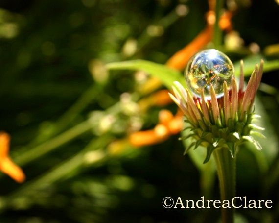 Summer Flower Sunny Afternoon 8x10 Fine Art by PhotoReverie