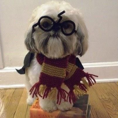harry potter and dog mixed together!!!