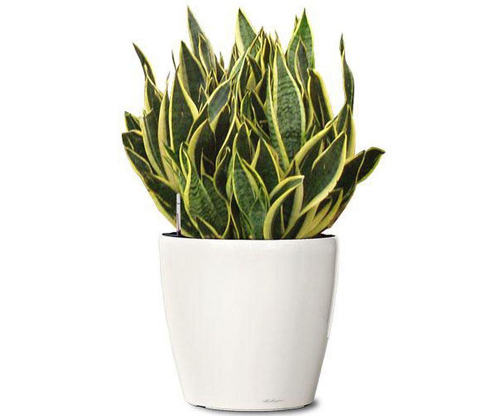 128 Indoor Plants Design Ideas