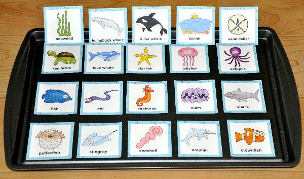 Ocean Vocabulary Cards--The Ocean Vocabulary Cards are ocean or sea life themed. This set contains 18 vocabulary cards including:  ocean, seaweed, octopus, jellyfish, pufferfish, starfish, stingray, shark, dolphin, killer whale, humpback whale, blue whale, fish, seashell, sand dollar, seahorse, eel, clam and sea turtle.