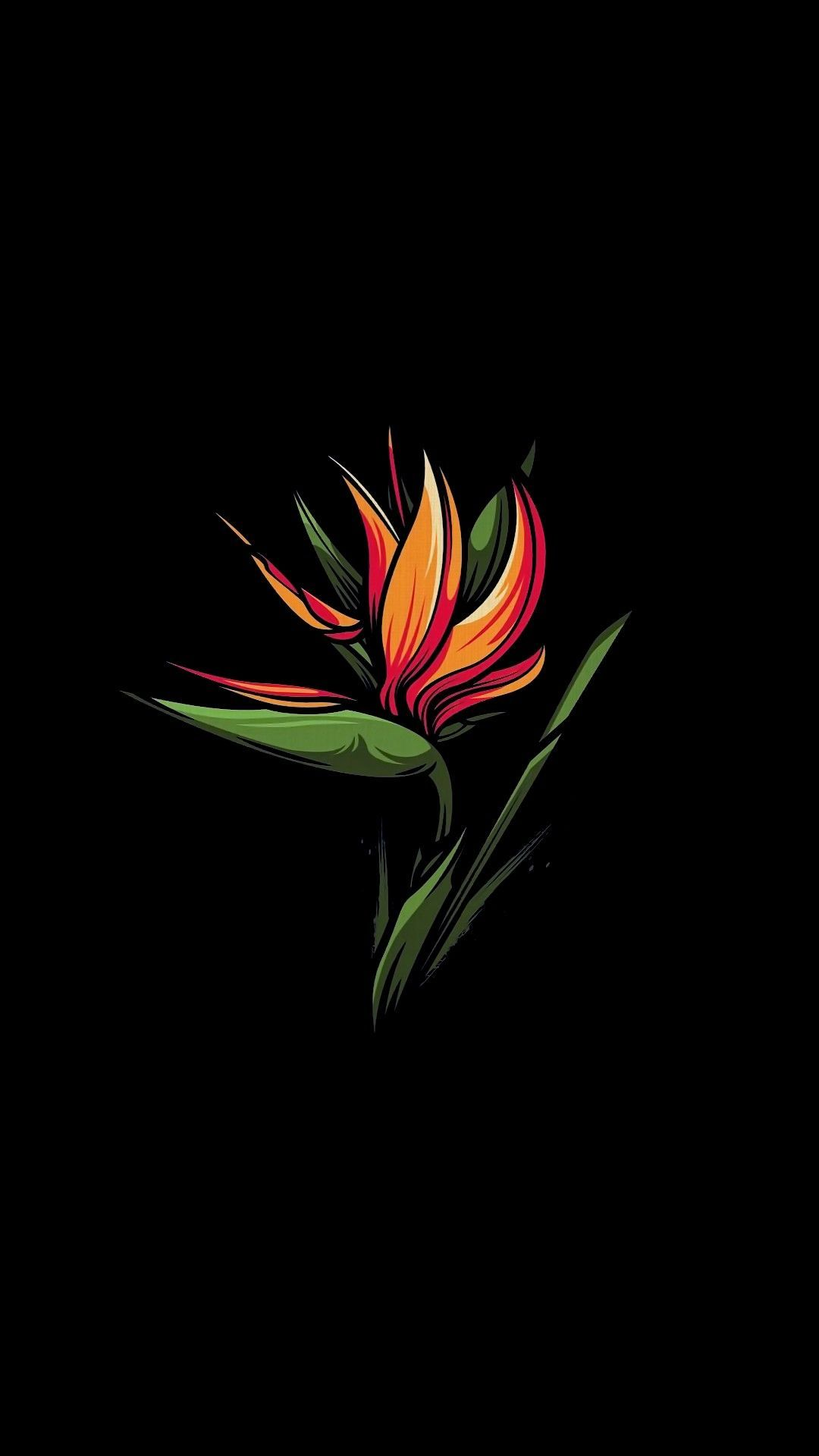 Bird Of Paradise Flower Plant Botany Flowering Plant Graphics In 2020 Black Wallpaper Iphone Wallpaper Birds Of Paradise