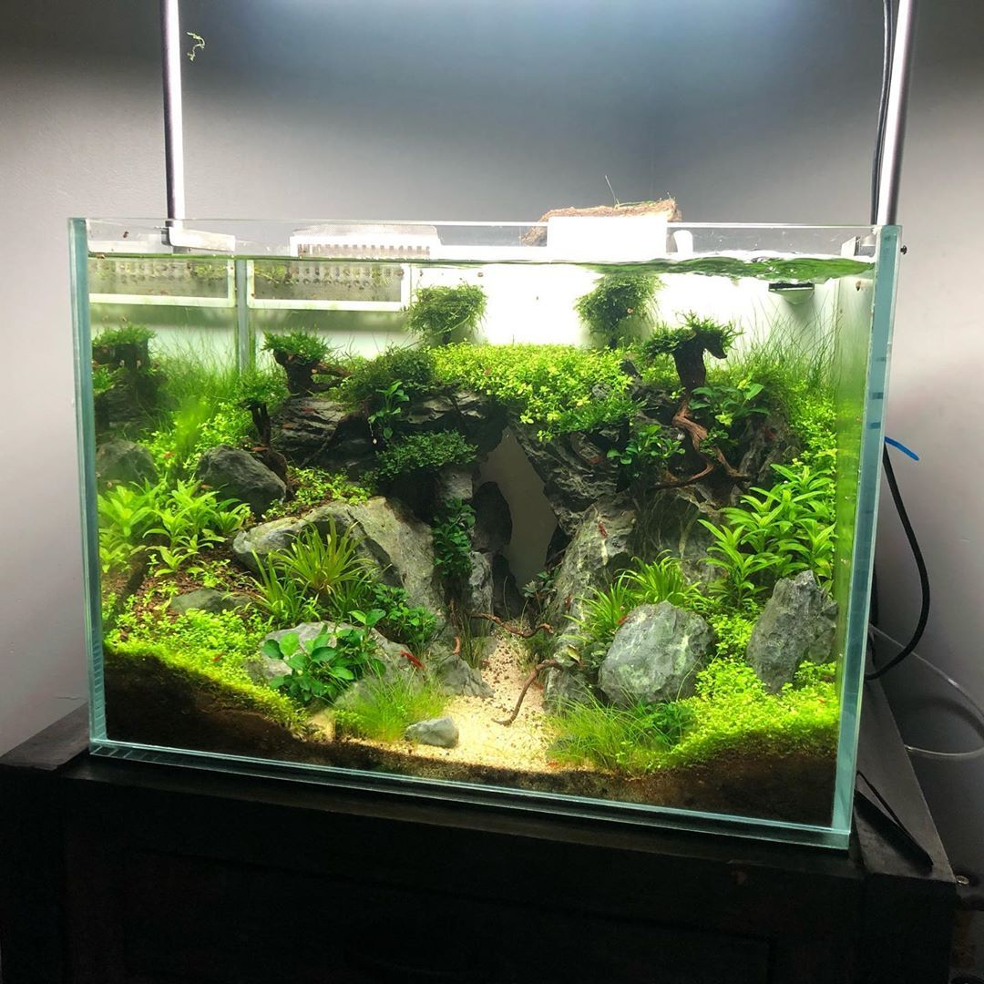 45 Nano Planted Tank Design Inspirations To Displayed At The Office Rooms And Living Room That Will Eliminate Your High Stress45 Nano Planted Tank Design Insp Fresh Water Fish Tank Community