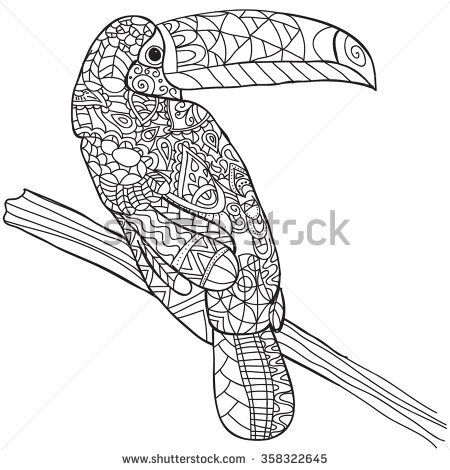 Hand drawn bird toucan Isolated on transparent background anti