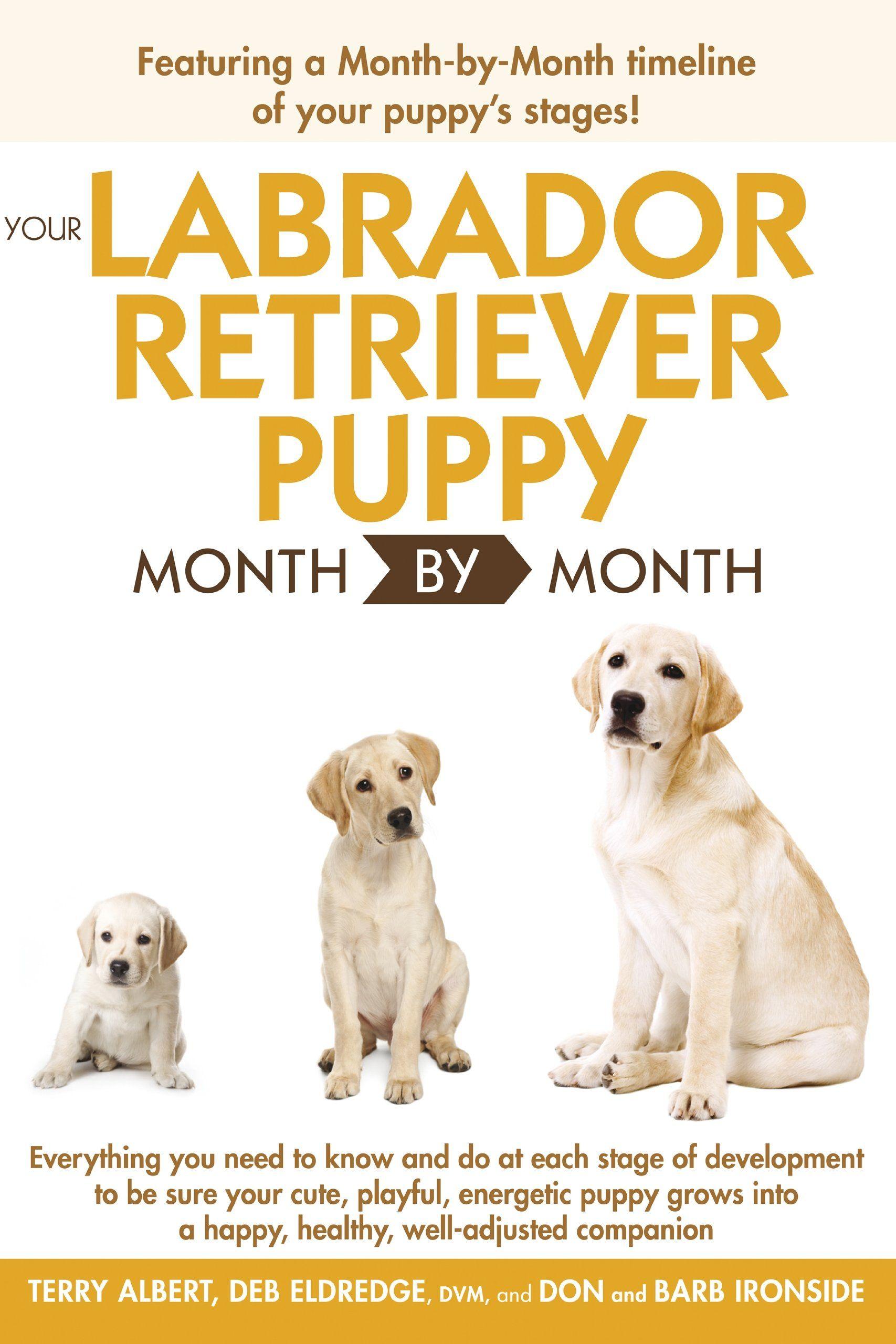 Your Labrador Retriever Puppy Month By Month Debra Eldredge Terry Albert Amazon Com Labrador Retriever Labrador Retriever Puppies Labrador Puppy