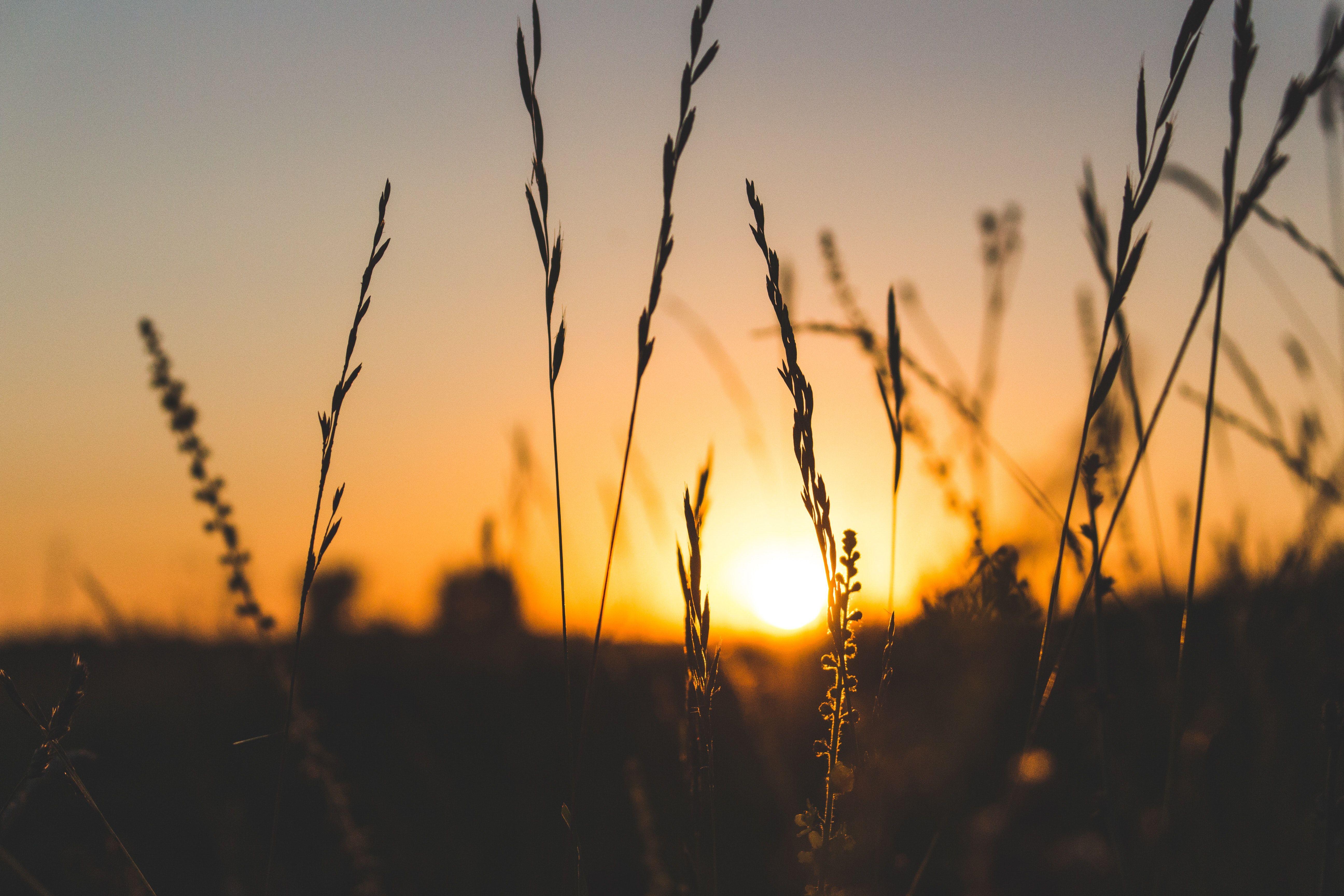 Pin By Soulistic Remedies On Www Soulisticremedies Com Sunset Colors Landscape Green Landscape