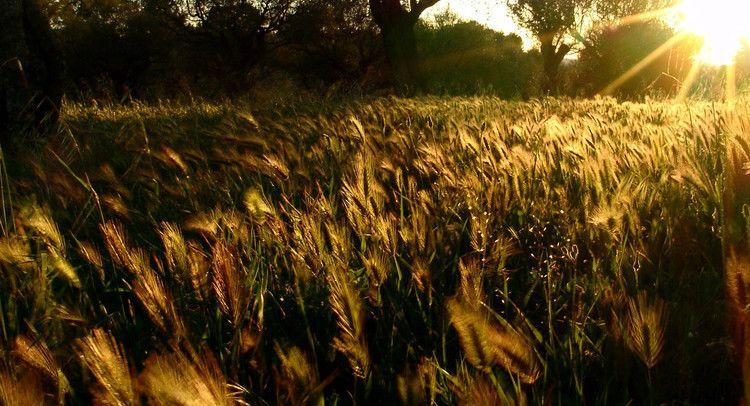 Le champ de Taradeau