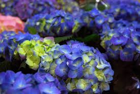Kuvahaun tulos haulle kukkia