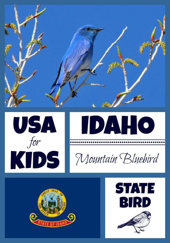 State Bird Coloring Pages By Bird Coloring Pages State Birds