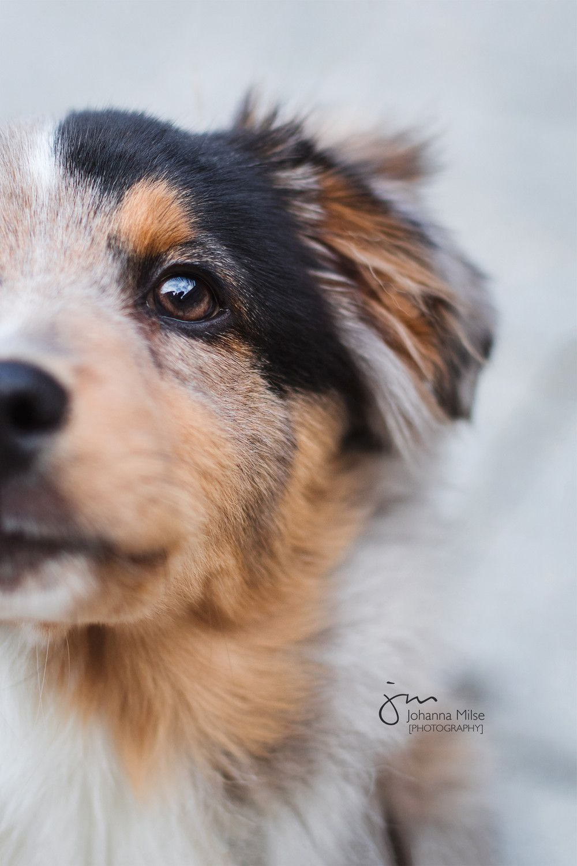 Hunde Pferde Und Hundefotografie Johanna Milse Photography