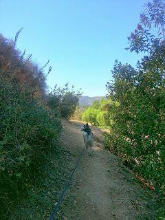 Trail Run La Trail Running Trail Running