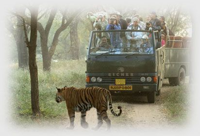 Ranthambore National Park Renders As The Rajasthan S First Project
