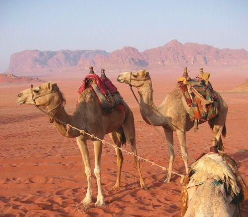 Middle East Adventure Travel Travel to Jordan Visit the Dead Sea #traveltojordan