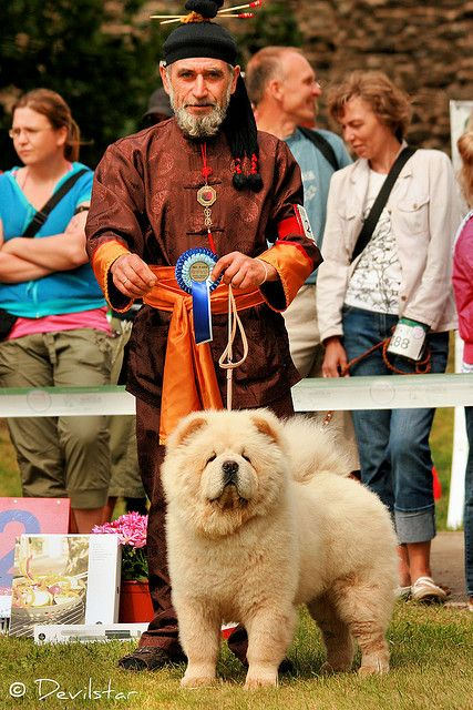 Chow Chow By Devilstar Chow Chow Dog Puppy Boo The Dog Chow