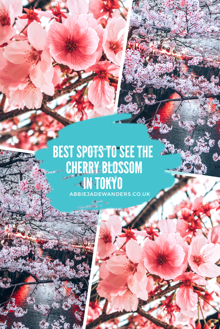 Best Places To See The Cherry Blossom In Tokyo Japan Travel Japan Travel Tips Cherry Blossom
