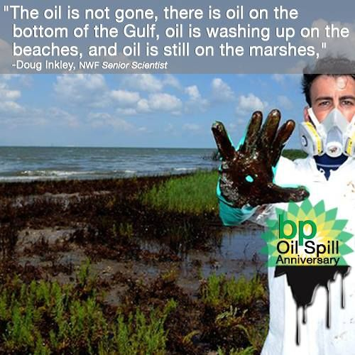 Four years ago yesterday, April 20, 210 million gallons of oil spilled into the Gulf of Mexico. It took 5 nearly months to stop the oil from leaking into the Gulf. Four years later, the oil is still washing up ashore and so are dead sea turtles and dolphins. Bluefin and Yellowfin tuna are also experiencing heart and liver problems, which is directly linked the oil at the bottom of the Gulf. SHARE this image to spread the word -- the impacts of the #bpoilspill are persistent in the Gulf.
