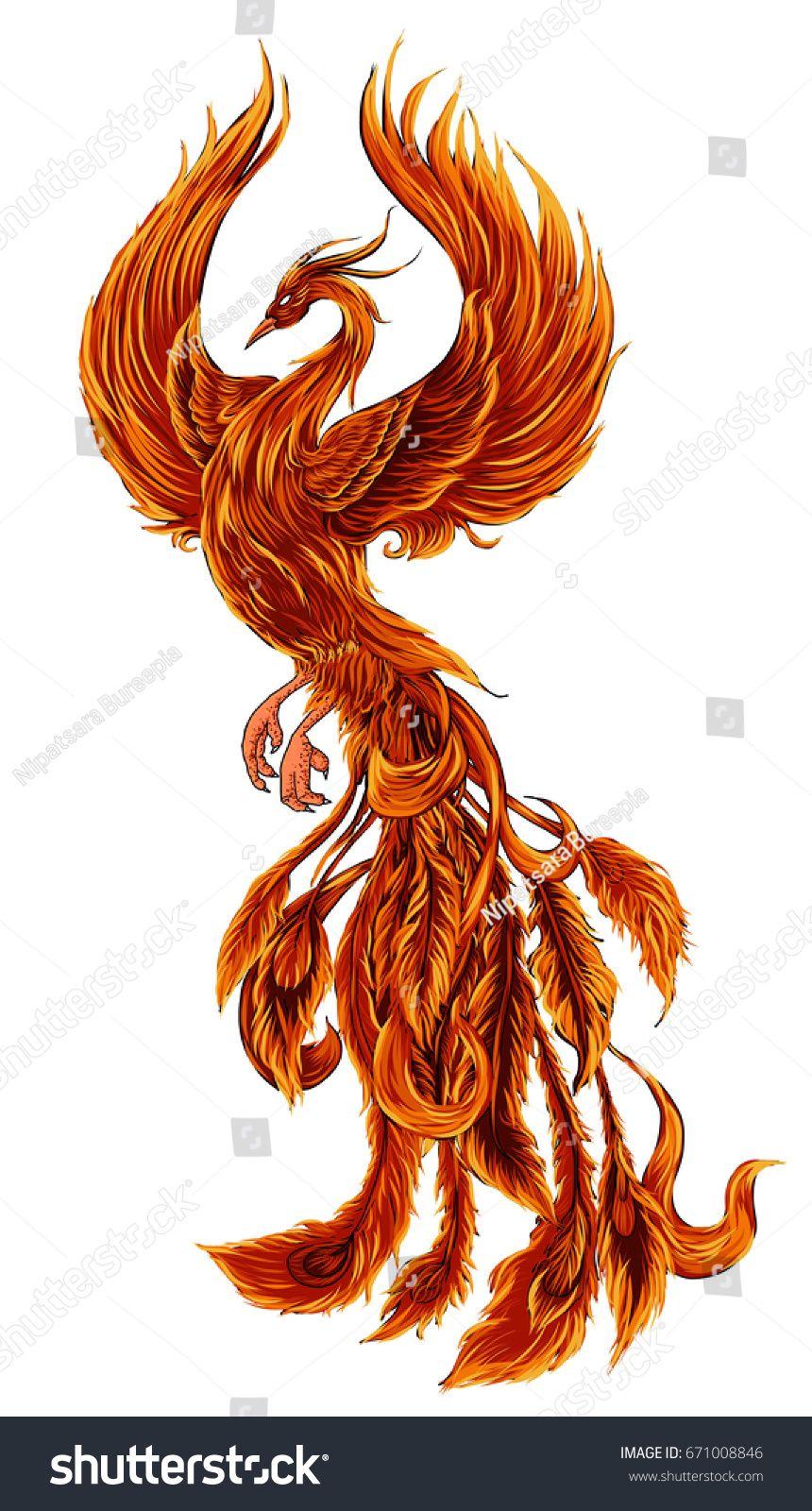 Phoenix Fire Bird Illustration And Character Design Hand Drawn Phoenix Tattoo Japanese And Chinese St Phoenix Bird Tattoos Phoenix Tattoo Design Phoenix Tattoo