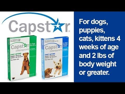 Capstar Is An Oral Tablet For Dogs Puppies Cats And Kittens 4 Weeks Of Age And Older And 2 Pounds Of Body Weight Or Greater A Sing Dog Cat Cat Vs Dog Dogs
