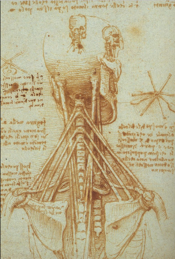 Leonardo Da Vinci - Anatomy of the Neck - 1515 | Leonardo da Vinci ...