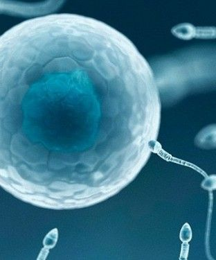 Weekly alcohol consumption can make young men's sperm