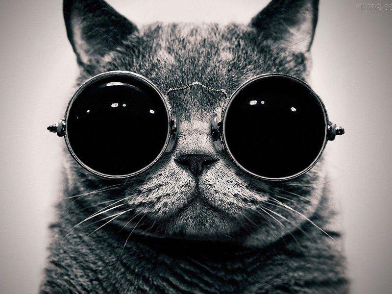"""Amantes dos felinos vão gostar disso: N0s dias 23 e 24 de agosto, a Sociedade Morgenau sedia a """"15ª Exposição Internacional de Gatos"""". São 120 gatos de 18 raças diferentes. Evento ocorre das 13h às 18h, e entrada custa um quilo de alimento para gatos. Arrecadações serão encaminhadasà ONG Gatos Mil, sediada em Colombo. Entre...<br /><a class=""""more-link"""" href=""""https://catracalivre.com.br/curitiba/agenda/barato/evento-reune-as-mais-diferentes-racas-de-gatos-em-curitiba/"""">Continue lendo »</a>"""