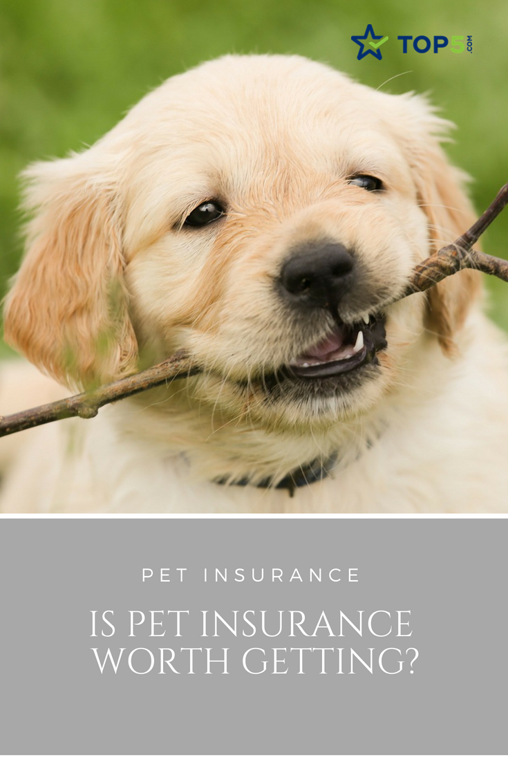 Is Pet Insurance Worth Getting Golden Retriever Names Golden