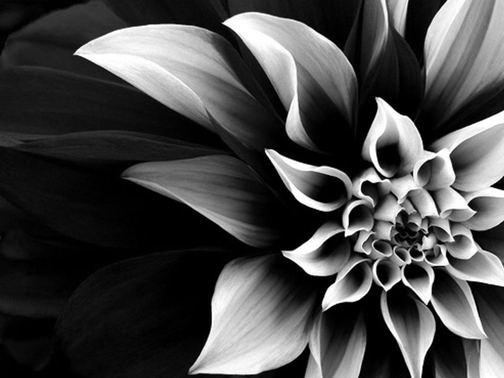 Find This Pin And More On Diy Divine Flowers Pictures Black White Hd Images 3 Wallpapers