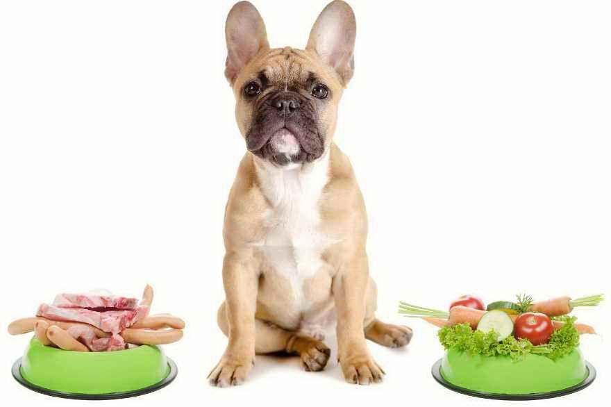 Dog food for dogs with allergies
