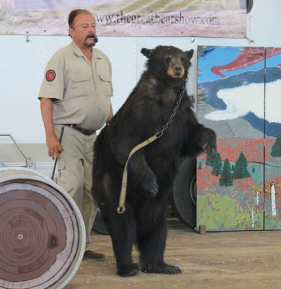 TAKE ACTION! Bears Imprisoned and Forced to Perform | Take Action | peta2.com