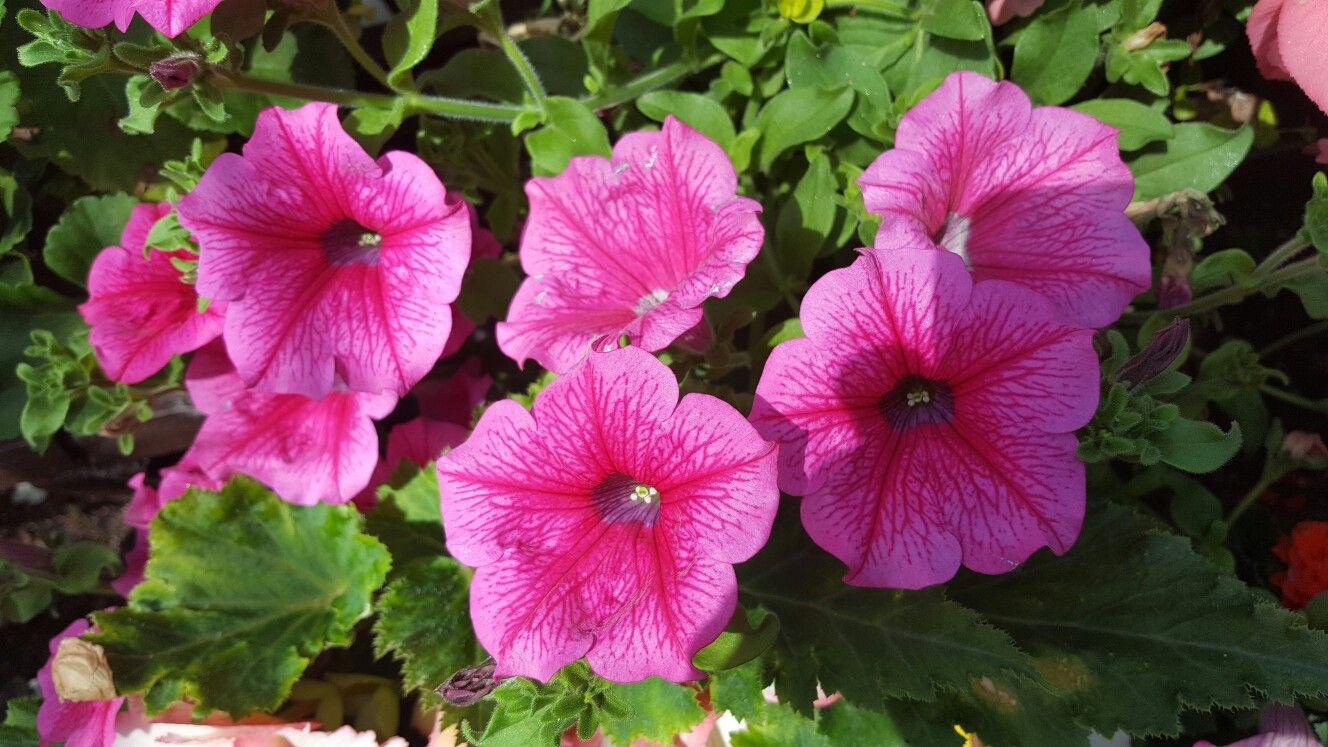 Gorgeous Pink Flowers At Craigtoun Park Days Out Pinterest