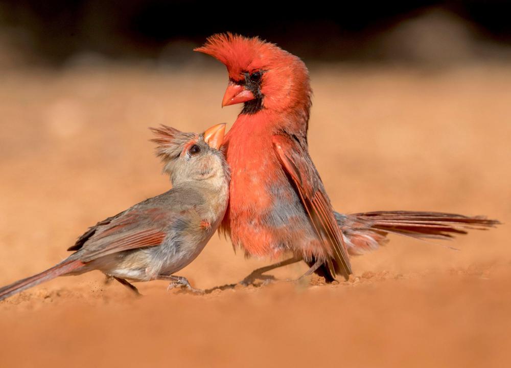 Bird Behaviors