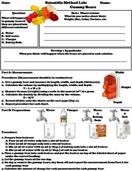 Scientific Method Activity Gummy Bears Science Experiment