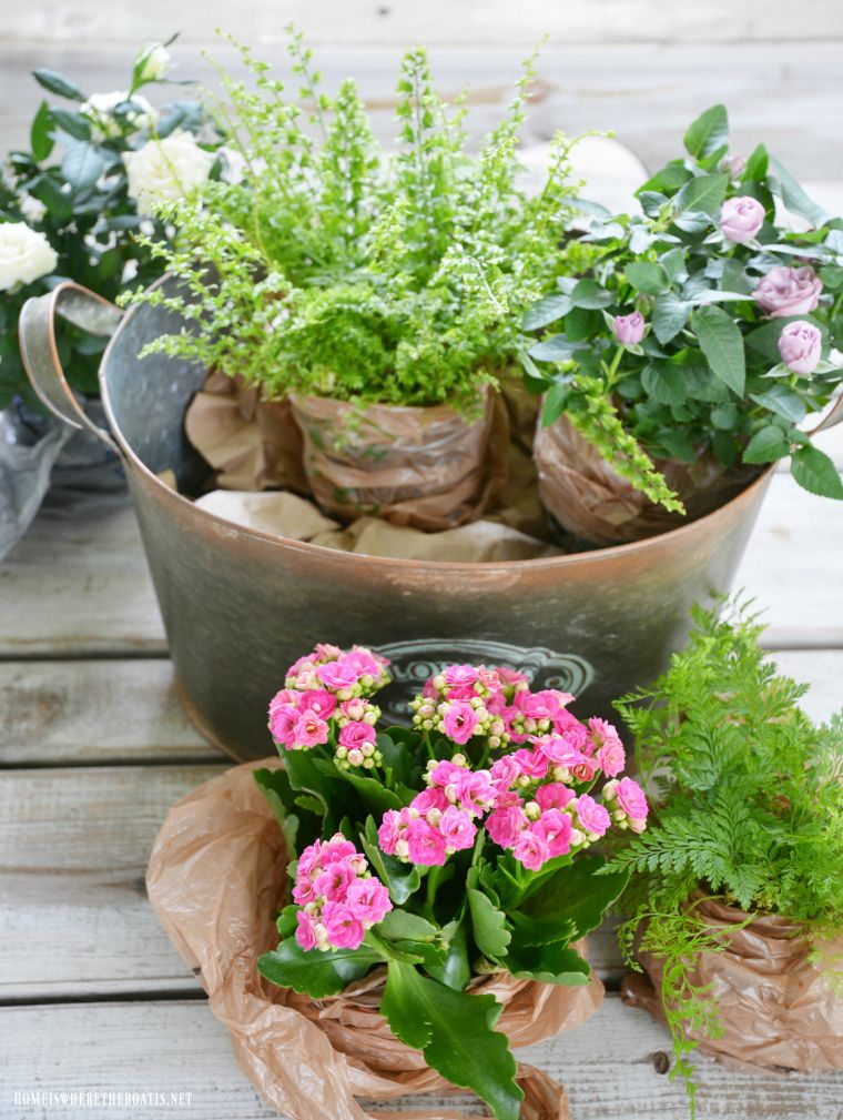 Floral Friday DIY Indoor Container or Dish Garden (With