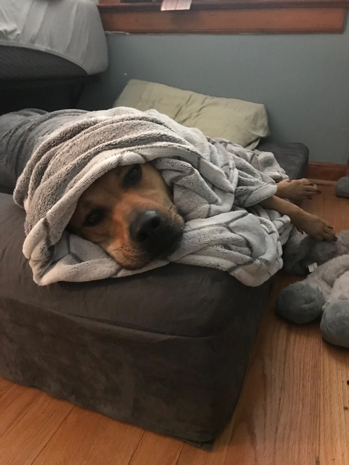Pin on Best dog beds