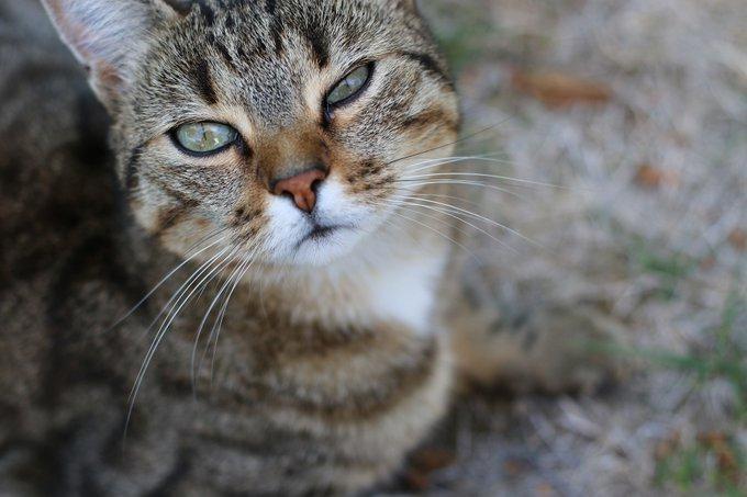 11 ペットくすりwebさん Petkusuriweb Twitter Feline Animals Cats