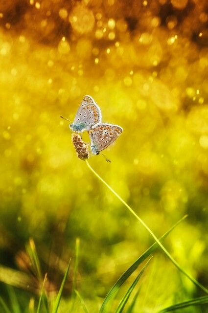 The butterfly in love ♥
