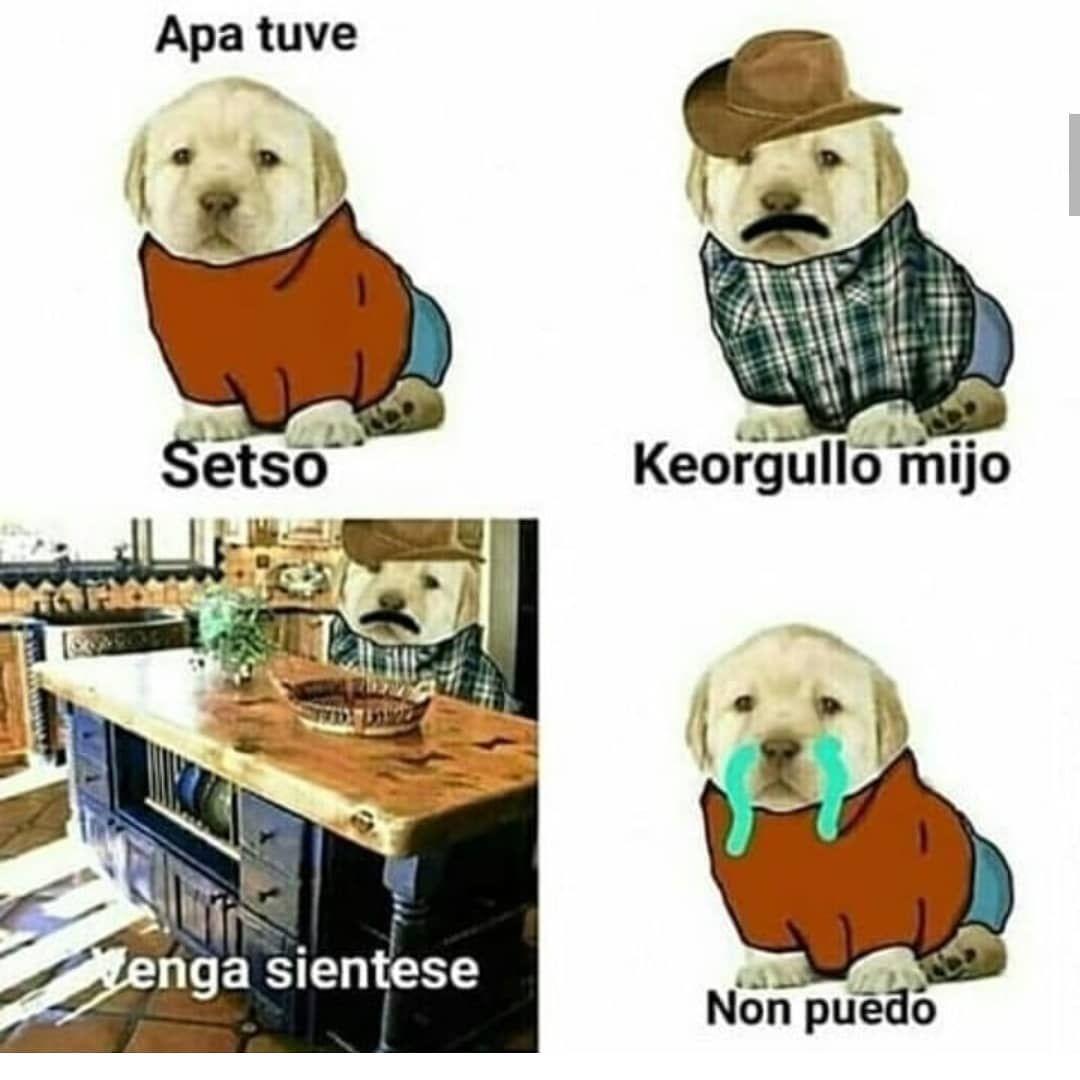 Cuando Alguien Le Grita A Tu Perro Memes Divertidos Imagenes Divertidas Memes Graciosos