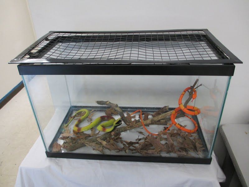 Glass tank with snakes