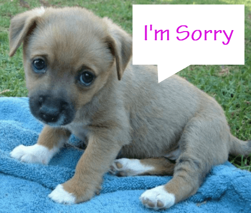 Pictures of Im Sorry Puppy - #rock-cafe