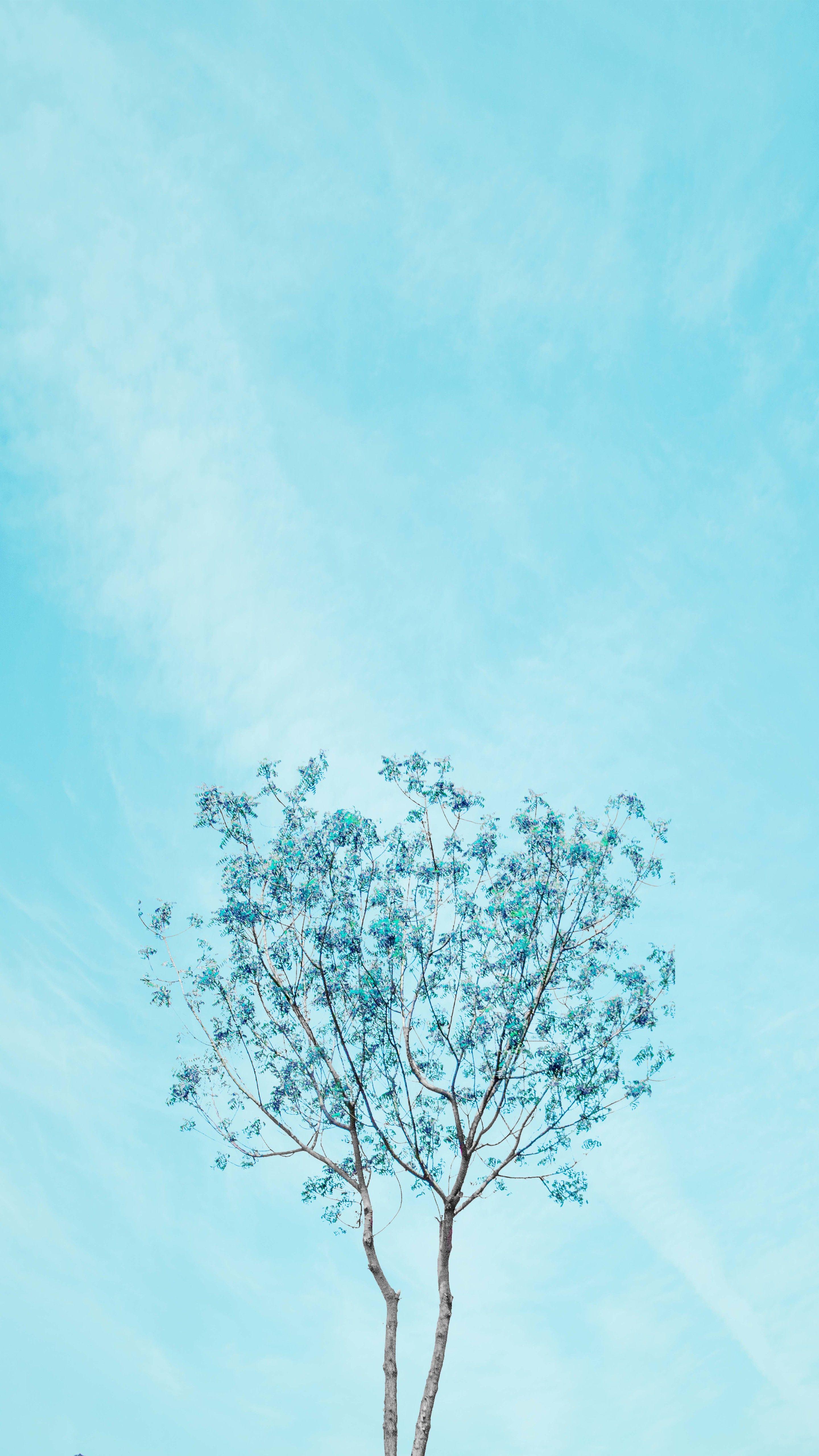 Pacific foliage Fundos de primavera, Estética azul