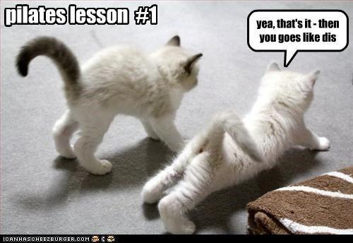 e09812eafac1bfb041fee904c908b9eb pilates meme funny movies music pinterest cat, animal and