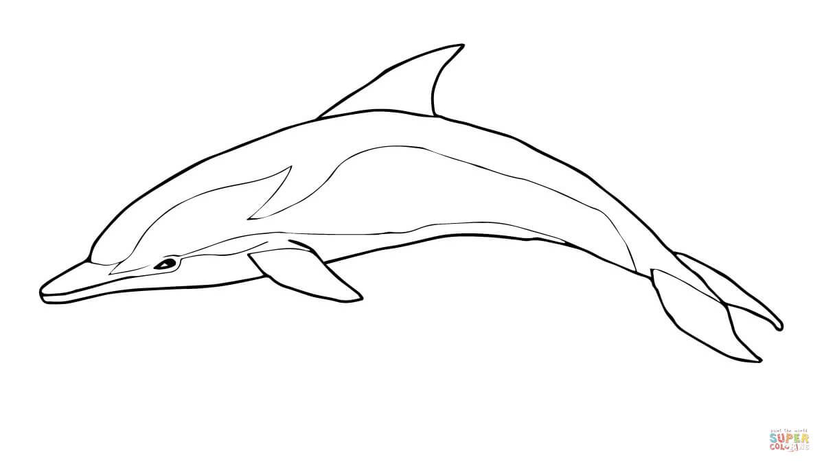Striped Dolphin Coloring Page From Dolphins Category Select From 29189 Printable Crafts Of Cartoons Dolphin Coloring Pages Coloring Pages Fish Coloring Page