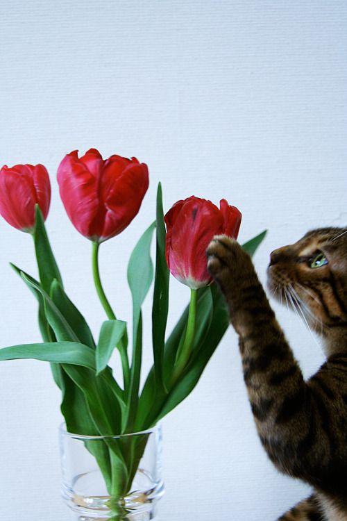 Mariusu Pretty Cats Cat Grass Tulips