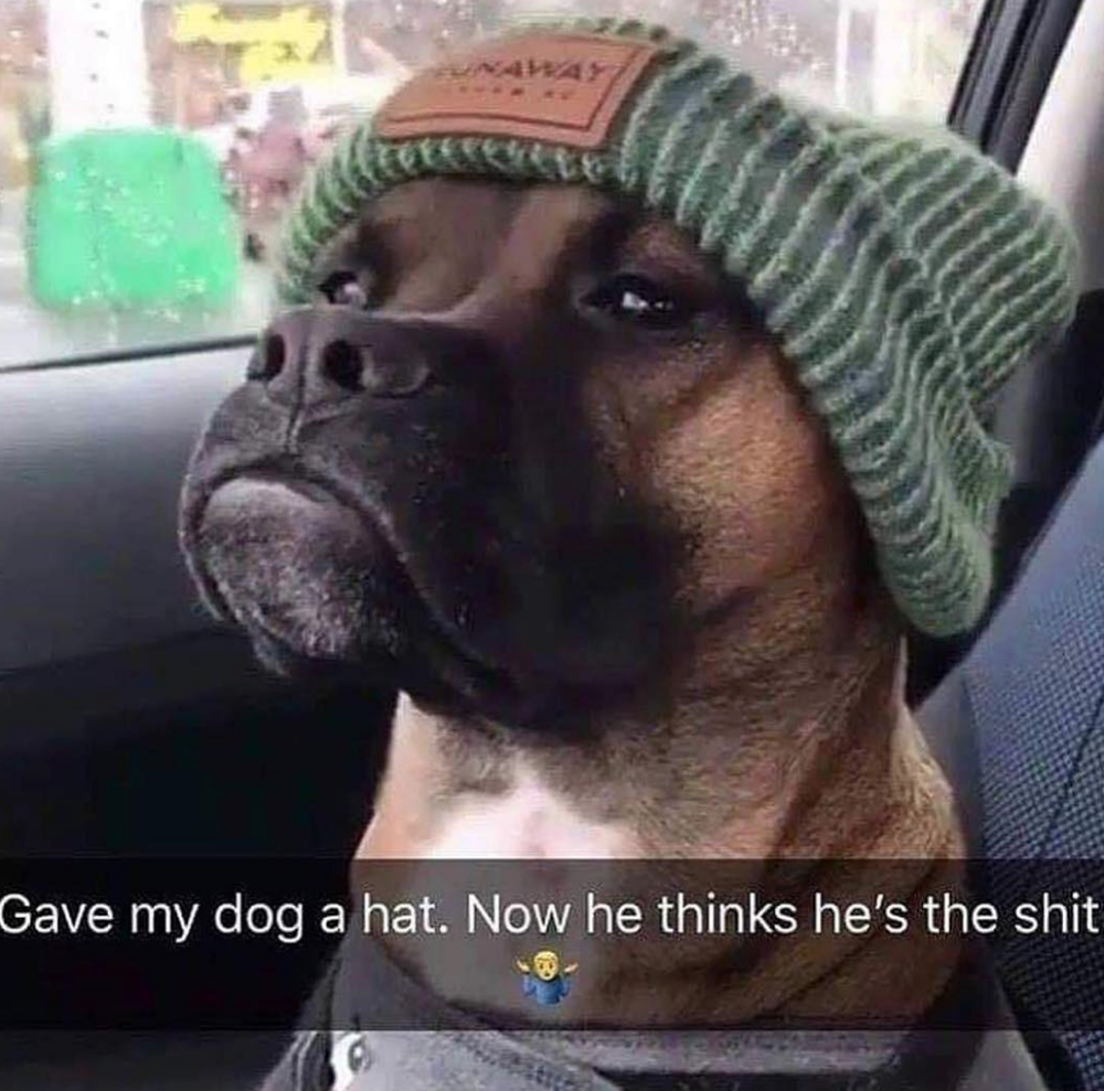33 Fresh Doggo Memes To Lift You Up And Remind You That Tomorrow Is Friday #funnydogs