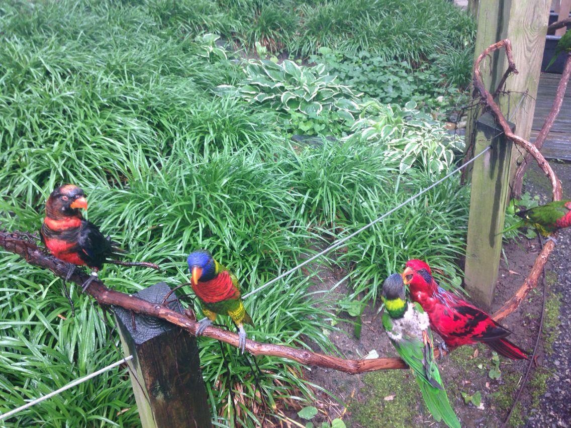 Bird kisses Philadelphia zoo