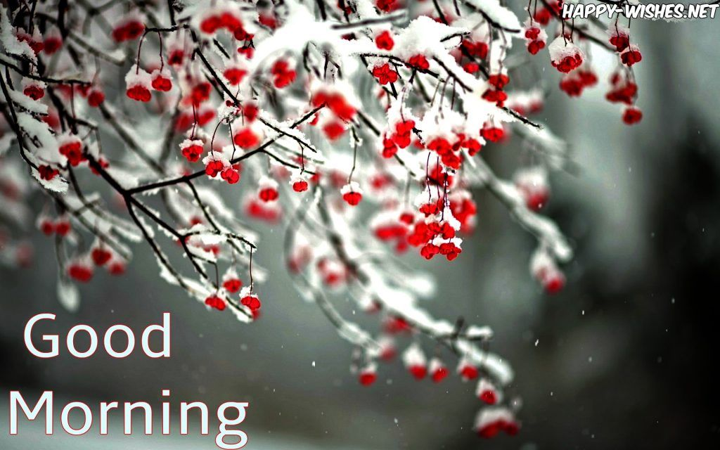 Good Morning Winter Images With Snow On Tree Good Morning Winter Good Morning Winter Images Good Morning Wishes