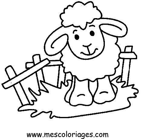 Sheep Printable Coloring Pages Coloring Pages Lamb Drawing