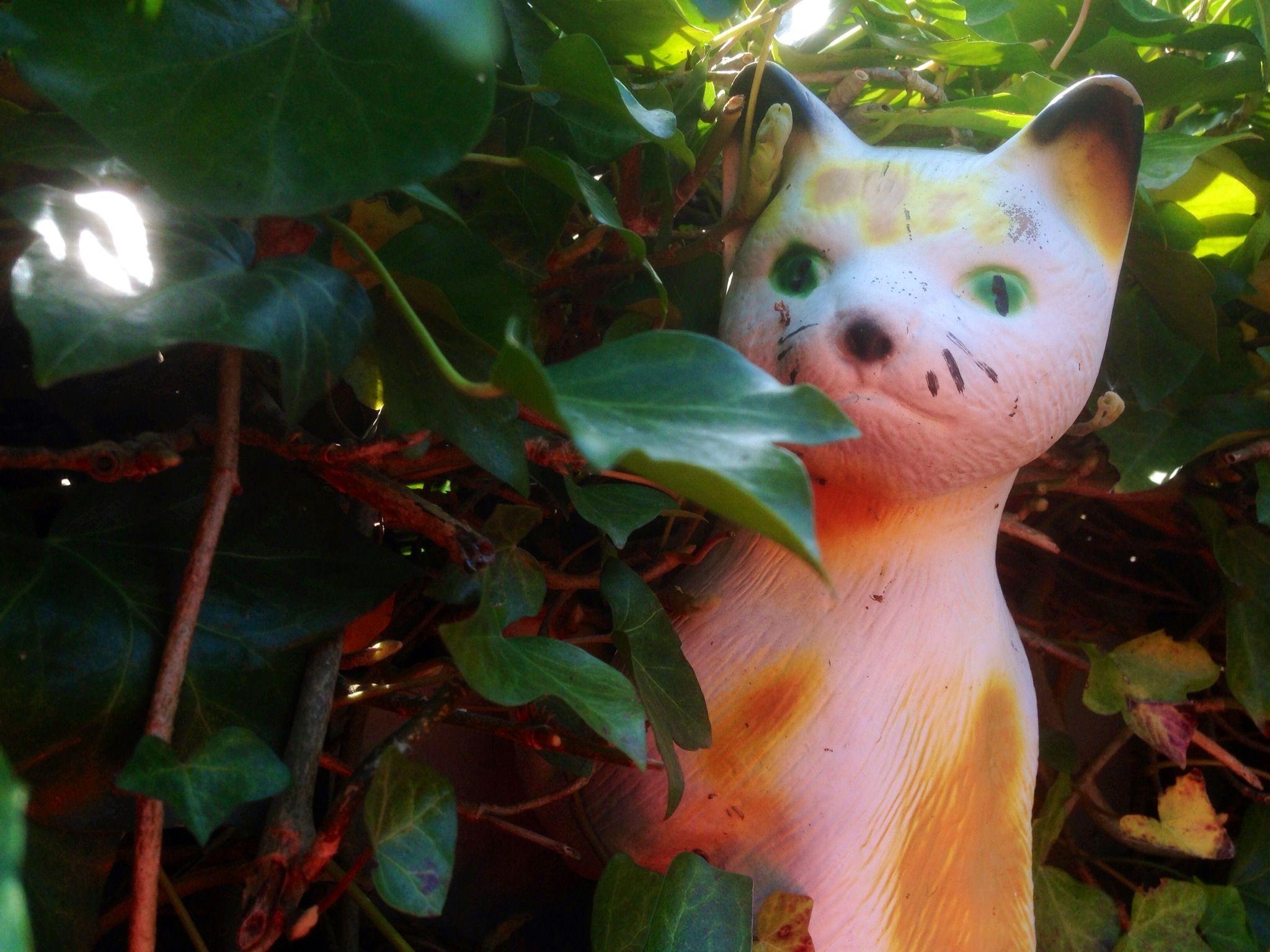 Our polish garden cat
